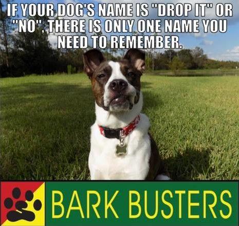 #barkbustersdogtraining, barkbustersfairfieldcounty