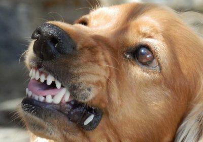 #trainaggressivedogs, #stopdogaggression #dogsofbarkbusters