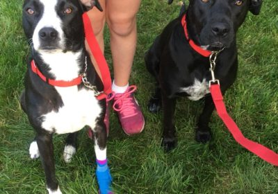 #multidogtraining #dogsofbarkbusters #dogtraining