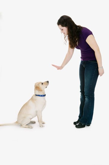 What Your Body Language Tells Your Dog